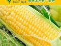 玉米神 玉米神诚邀加盟