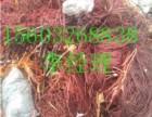 青岛废电缆回收青岛废旧电缆回收青岛废铜电缆回收