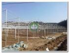 内蒙古智能温室 连栋智能温室发展 销售优质智能温室 户外温室