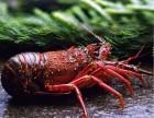 盱眙龙虾苗养殖基地小龙虾的生活习性