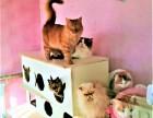 衙门口宠物寄养 长期提供猫猫狗狗寄养服务 房间有暖气可接送
