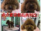 四平温馨宠物美容师培训学校