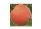 果品销售,潍坊桃树苗批发价格