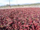 新疆巴州地区出售干辣椒