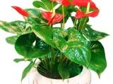 长宁区绿植盆栽办公室花卉植物租赁植物租摆长宁区室内养护
