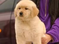 济南哪里有宠物狗出售 济南哪里可以领养小狗