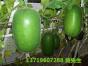 惠州地区好的工厂蔬菜配送服务 ——贴心的工厂蔬菜配送
