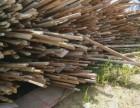 西宁大量回收旧方木,废旧胶木板
