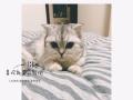 纯家庭式猫咪寄养