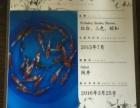 进口锦鲤(15-23)厘米