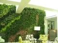 你不知道的植物墙植物医生!