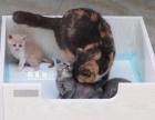 可擦洗实木猫产房猫产床 宠物产房
