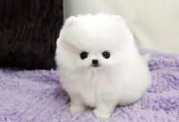 青岛哪里有宠物领养机构青岛宠物免费领养青岛狗狗免费领养