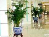苏州金丝雀园艺,做较优惠的绿植租摆 包满意
