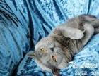 《小不点猫舍》《幼猫出售》《种猫借配》
