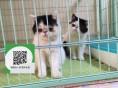 南通哪里有加菲猫出售 南通加菲猫价格 南通宠物猫转让出售