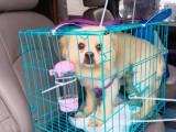 温州国内国际宠物托运公司