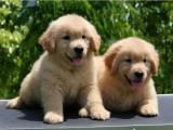 惠州官方认证宠物领养中心 多品种狗狗赠送