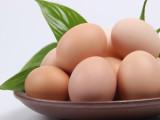 真正有机食品,纯正土鸡蛋源自大山里的泰美山谷