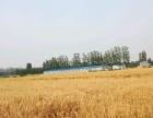 梁水镇 养殖用地10000平米