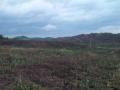 500亩优质土地低价出租或转让