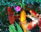 魚池清洗維護