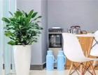 绿化租赁 苏州相城区绿化租赁 绿植租摆选择小园丁