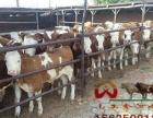 山西肉牛养殖场山西肉牛价格山西养牛场