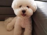 本溪大型养犬基地常年出售各种宠物狗狗幼犬