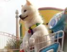 超级可爱银狐幼犬