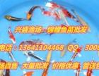 通辽市养殖水面鱼苗专业供应商、观赏鱼供应商