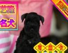 送货上门专业繁殖雪纳瑞幼犬签售后协议可见父母