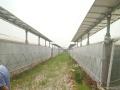 出租光伏架下露地、塑料大棚、池塘和智能温室大棚