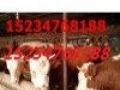 合作社转型急售肉牛奶牛