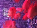 南京魚缸維護保養換水清洗