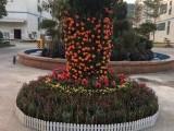 光明松岗公明周边年桔年花,园区绿化,养护,花木出租,绿植租赁