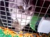 南安宠物托运宠物物流专车路线规划