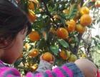 上海农家乐一日游 二日游 金秋采猕猴桃桔子 钓大鱼吃土菜