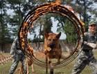 武汉狗狗训练,上门训犬,部队退伍结交爱狗人士 武汉上门训犬