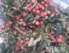 广州增城荔枝园采摘荔枝龙眼园+农庄午餐一二天游