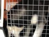 济南地区宠物托运全国宠物托运上门服务价格合理