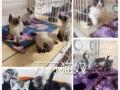 常德火车站 出售各类宠物猫