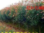 武汉专业私人庭院别墅景观设计施工养护、绿植花卉租摆