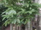 天津宁河室内花卉设计公司