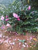 花卉租摆绿植租摆养护制造商,优质江西生态农业种子批发价格
