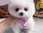 湛江哪里有宠物狗出售 湛江哪里可以领养小狗