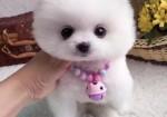 徐州哪里有宠物狗出售 徐州哪里可以领养小狗