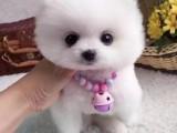 芜湖哪里有宠物狗卖 芜湖哪里有狗场 宠物店