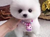 金华哪里有宠物狗出售 金华哪里可以领养小狗