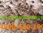 顺德北滘 陈村 乐从灭白蚁公司专业白蚁防治公司